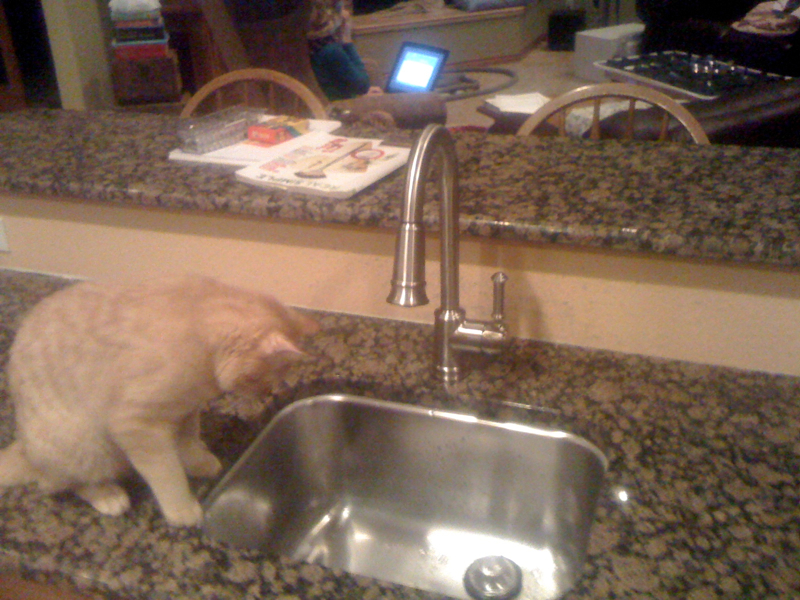 Kitchen Midway, Second Sink, and cool cat
